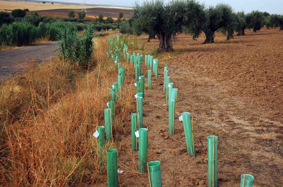 El proyecto AgreTTos ofrece ayuda online para crear setos en cultivos agrícolas mediterráneos