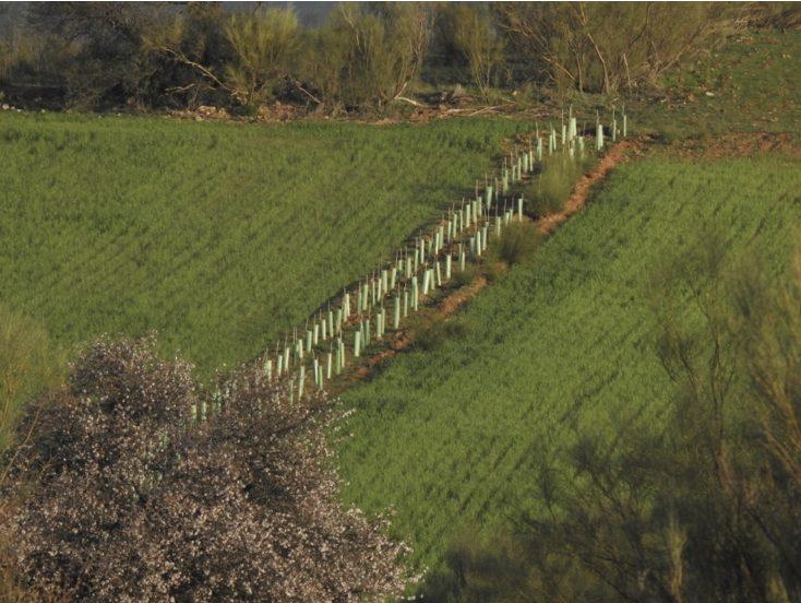 PAC y biodiversidad: la importancia de no plantar de cualquier manera