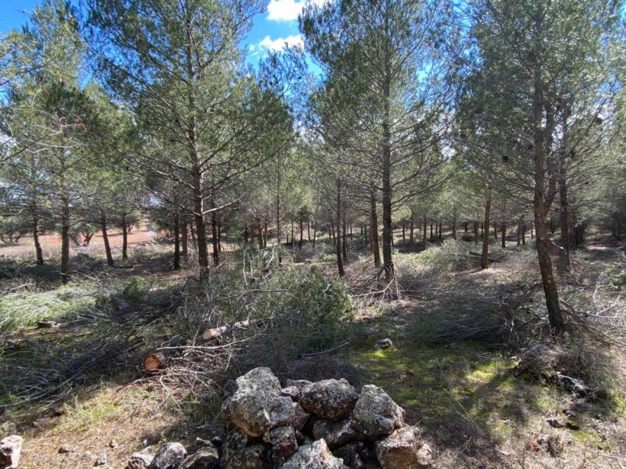 Nuevo proyecto sobre mejora de plantaciones forestales
