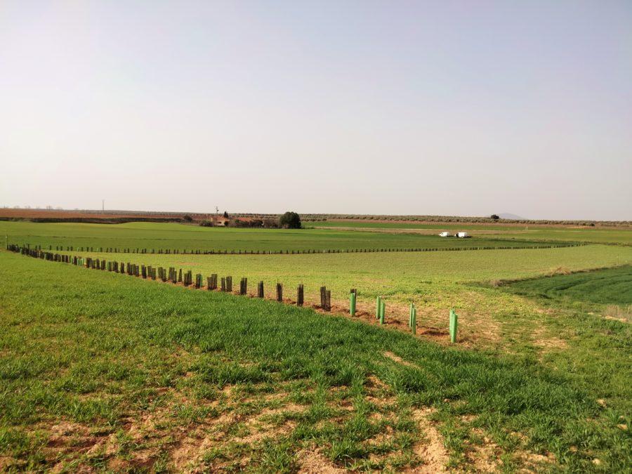 Introducimos actuaciones que facilitarán la alimentación del cernícalo primilla y el aguilucho cenizo en el Campo de Montiel