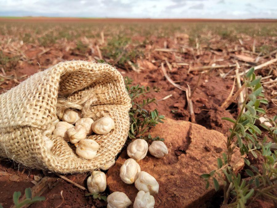 Más de 70 organizaciones solicitan al Gobierno que el Plan de Recuperación promueva sistemas alimentarios sostenibles